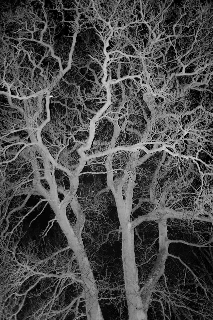 Coronary Tree